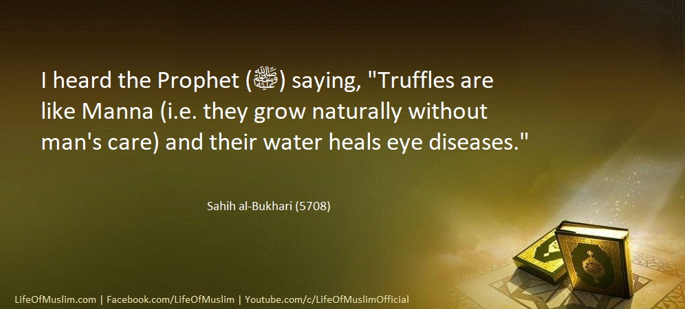 Truffles Are Like Manna And Their Water Heals Eye Diseases